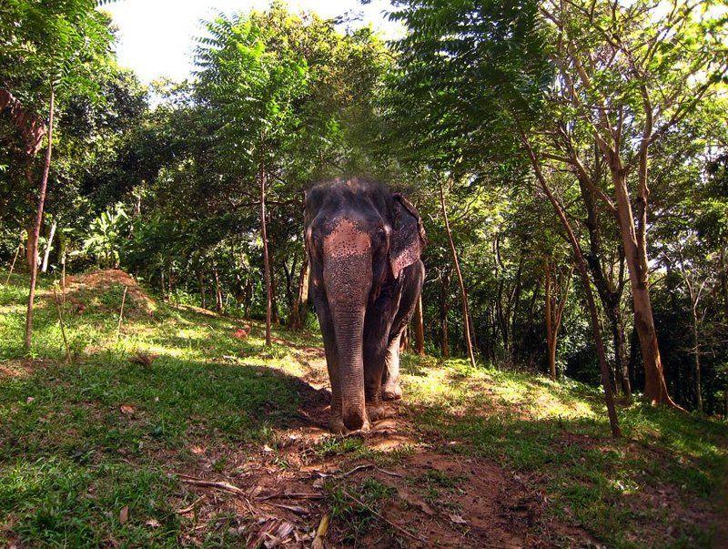 слон, таиланд Слон. Просто слон.photo preview