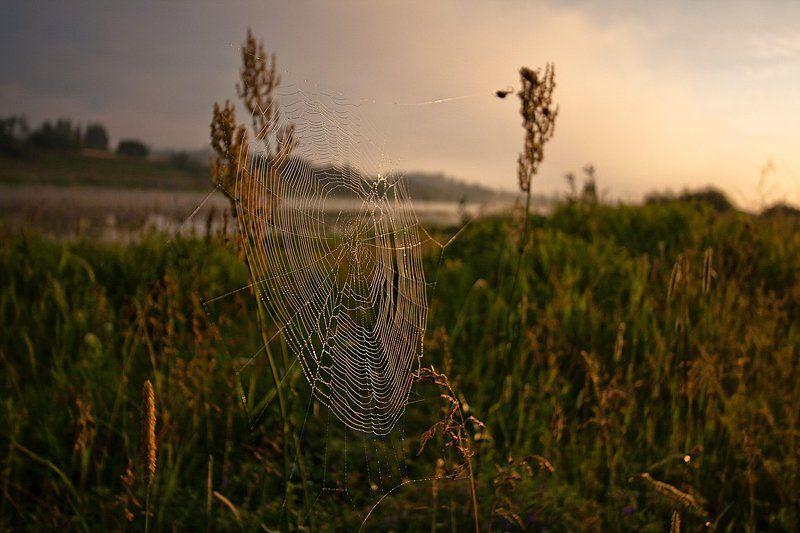 паутина, утро, рассвет, река, солнце, Волга Паутина..photo preview
