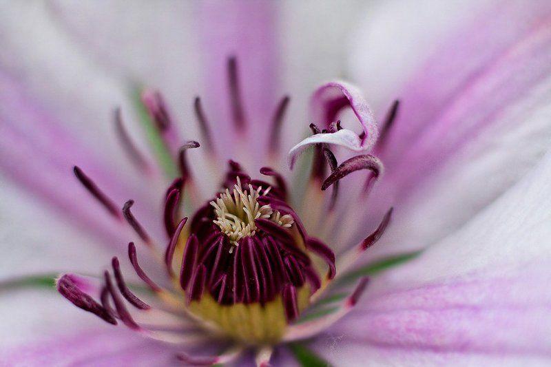 цветы Безмолвие цветов..photo preview