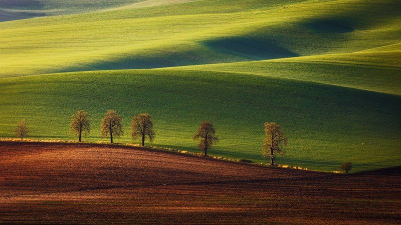 Alley, Chestnut, Colors, Countryside, Czech republic, Fields, Landscape, Light, Martin rak, Photo tour, Rural, South moravia, Spring, Workshop Chestnut Alleyphoto preview