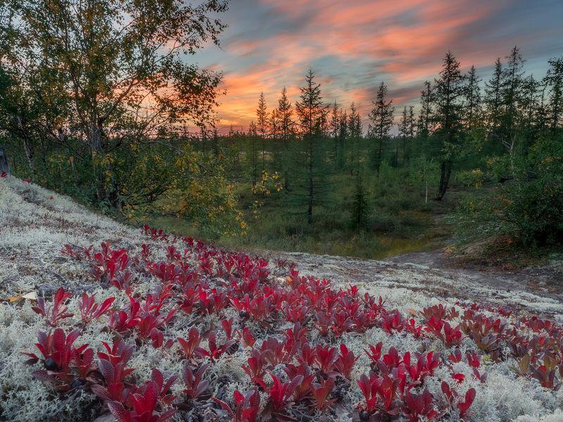 ямал,  пейзаж, тундра, россия,новыйуренгой, уренгой Провожая лето, встречая осень.photo preview