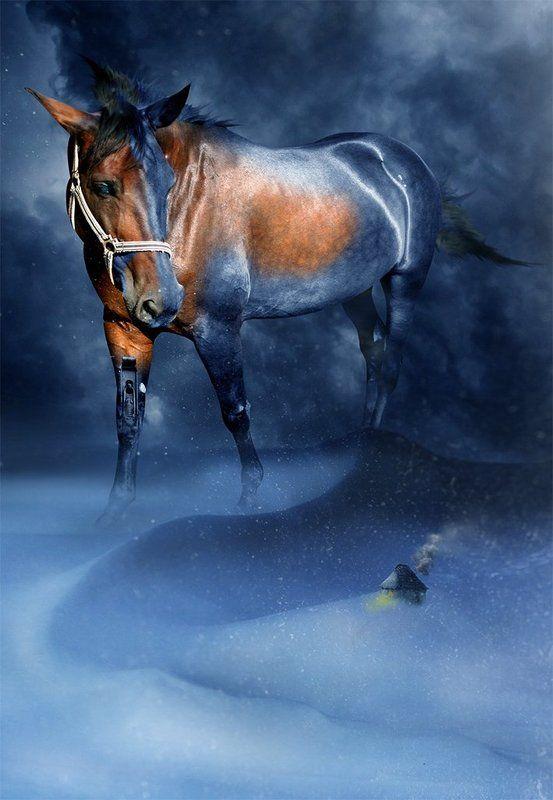 Конь стужи...photo preview