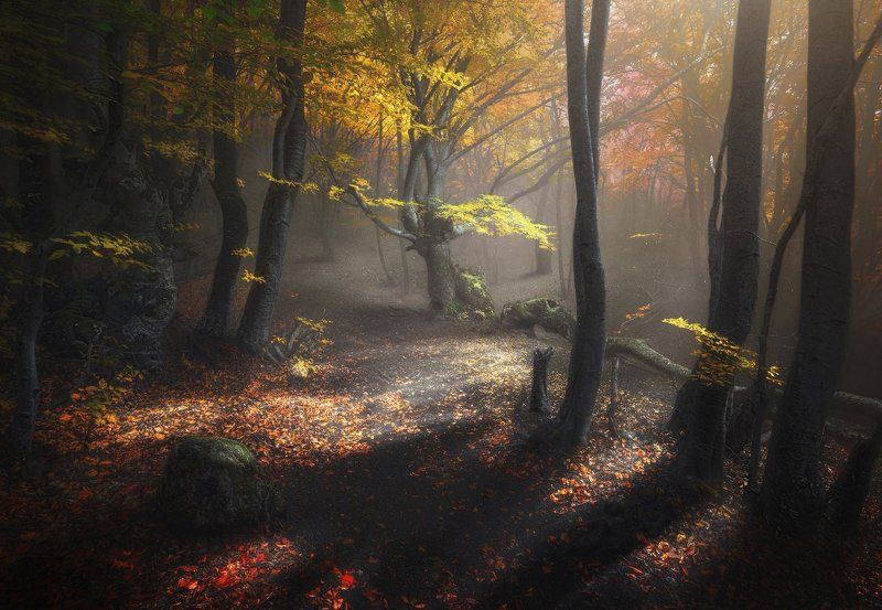 Крым Осенний лес. Демерджи. photo preview