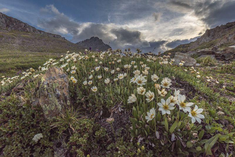 пейзаж, природа, цветы, горы, облака, закат Белые дриадыphoto preview