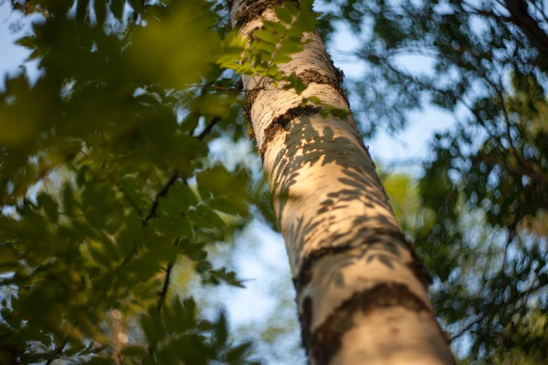 TREE COLOUR ***photo preview