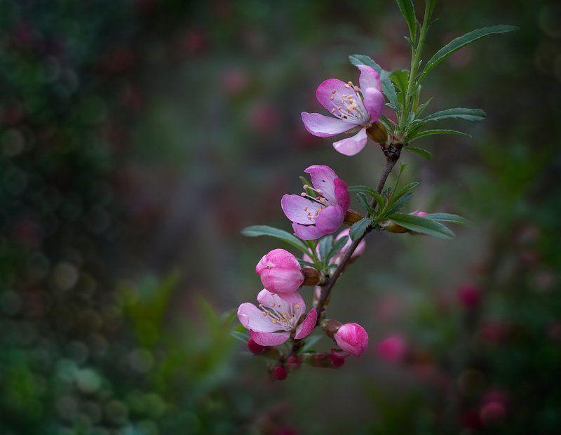 Весна, Флора, Цветение Просто была весна...photo preview