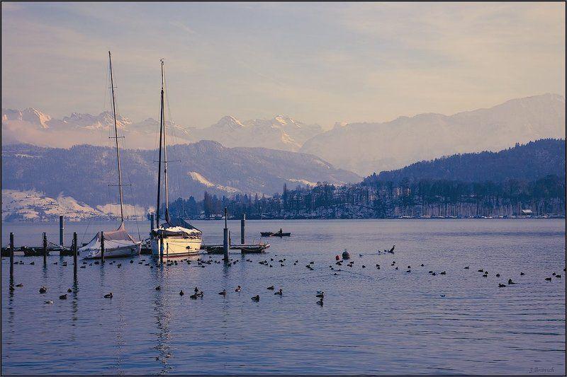зимний, заплыв Зимний заплывphoto preview
