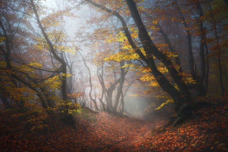 крым, демерджи Осень в крымском лесуphoto preview