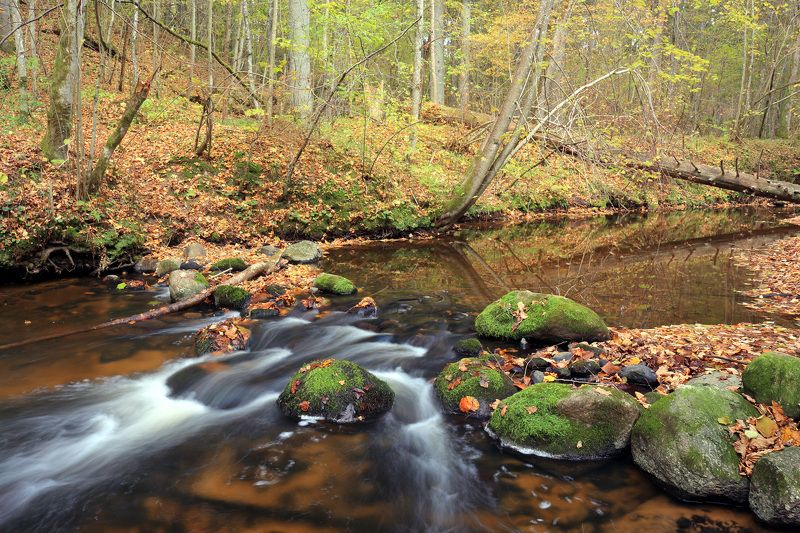 Река Лоя в октябреphoto preview