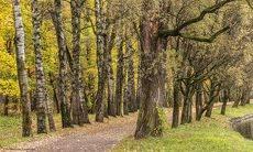 Осенняя зарисовка. Фото 6.
