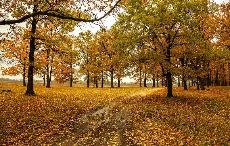 Дорога в Осеньphoto preview