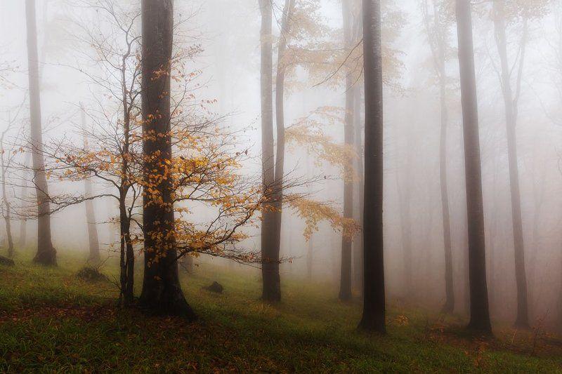 гора, лес, осень, туман Осень моя, люблю тебя!photo preview