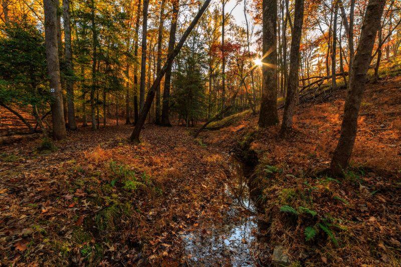 Осенний лесphoto preview