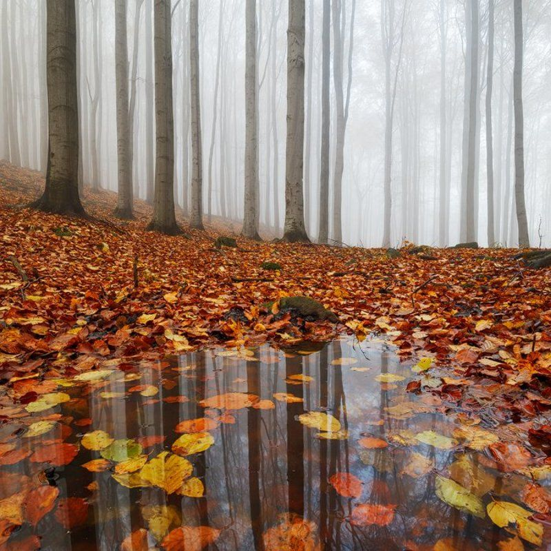 autumn, fall, light, fog, forest, mist, colors, czech republic, puddle, water, leaves, reflection, foliage Puddlephoto preview