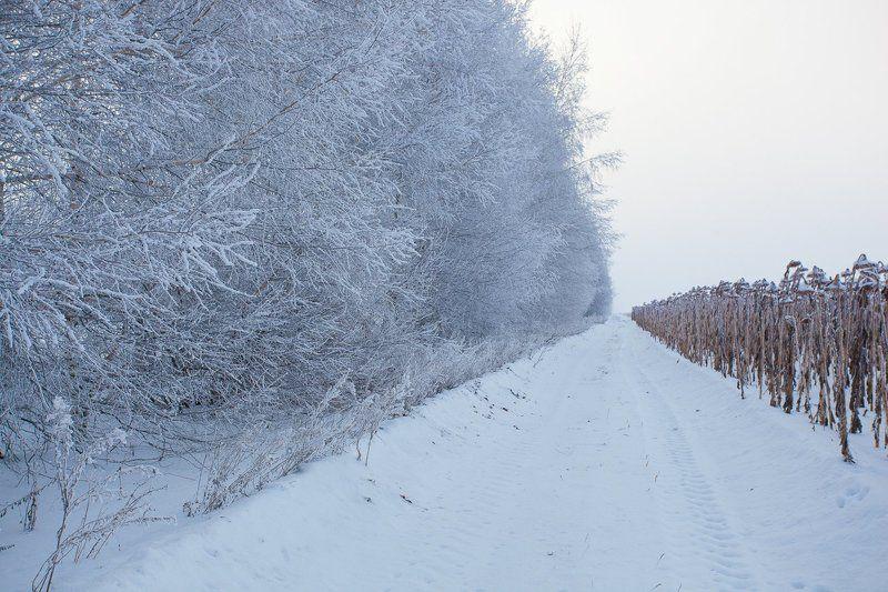 Зима, Подсолнухи, Холод Замерзшее солнцеphoto preview