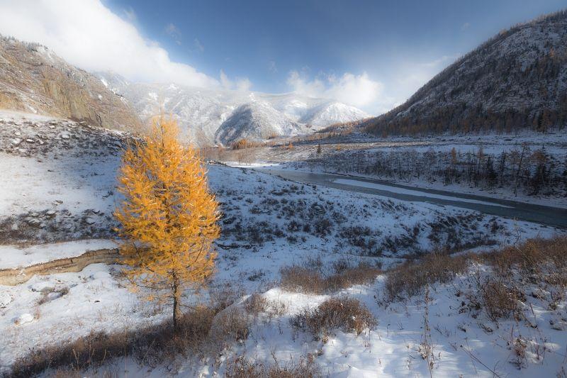 Горный Алтай, Чуя, вода, бирюза, снег, лиственницы, горы На чуйских берегах...photo preview