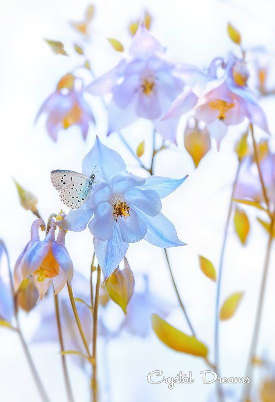 nature, crystal dreams, color, spring, butterfly, flowers photo preview