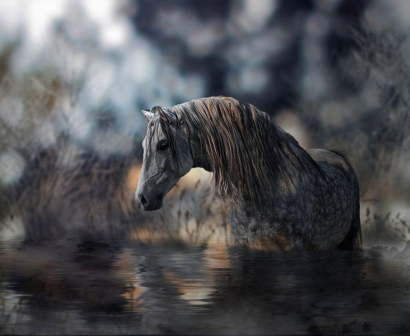 лошадь,озеро,свет In my Dreamsphoto preview