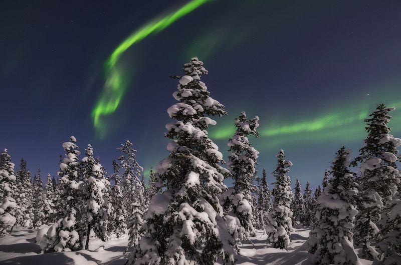 Северное сияние, Aurora borealis Прогулка в лесуphoto preview