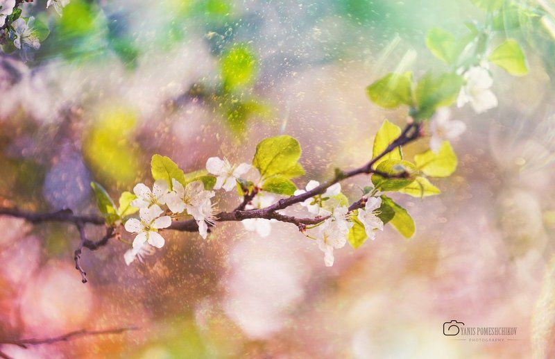spring,nature,flowering springphoto preview