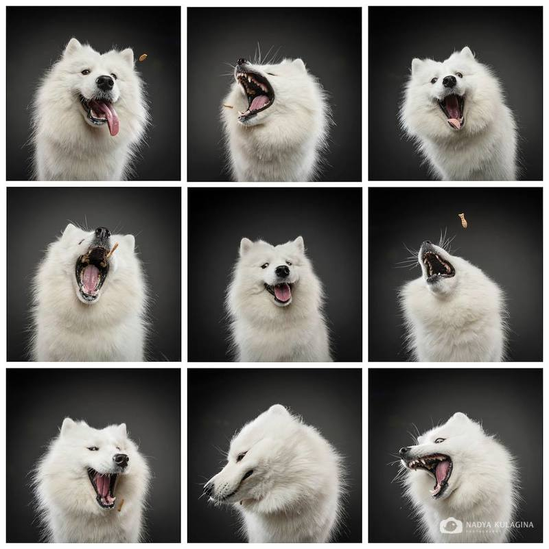 flying food, dog, fun, catching, faces, expression, laugh, amazing ...while the food keeps flying byphoto preview