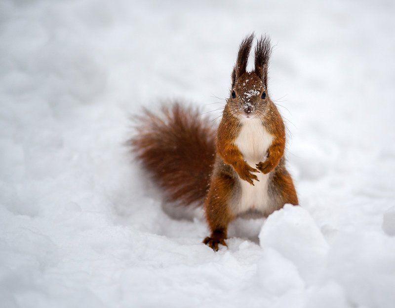 Орешка не найдется?..photo preview