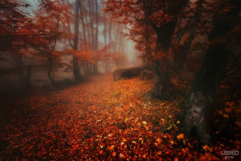Осенними дорогамиphoto preview