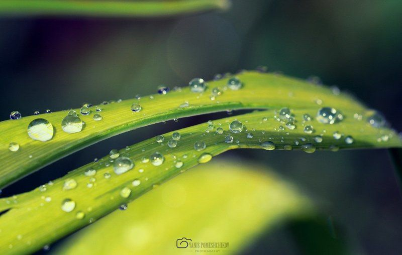 nature,water,morning,flora ***photo preview