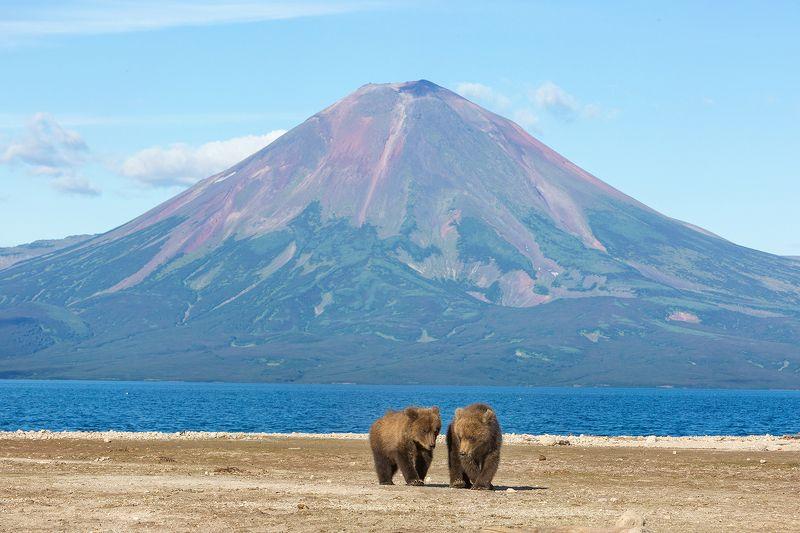 Медведь, Камчатка Настоящая Камчаткаphoto preview
