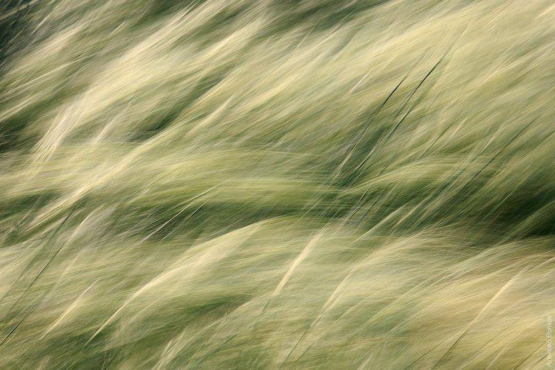 ковыль, абстракция  Море зелениphoto preview
