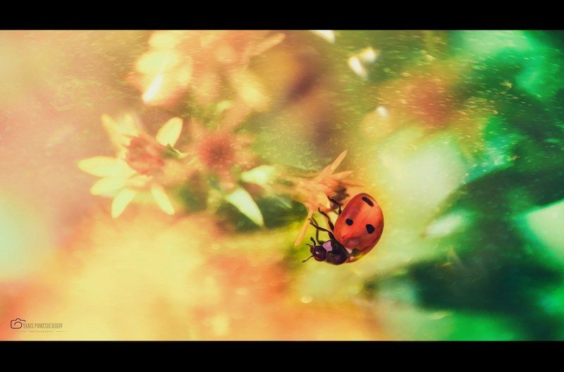 ladybug,nature,insects story about ladybugphoto preview