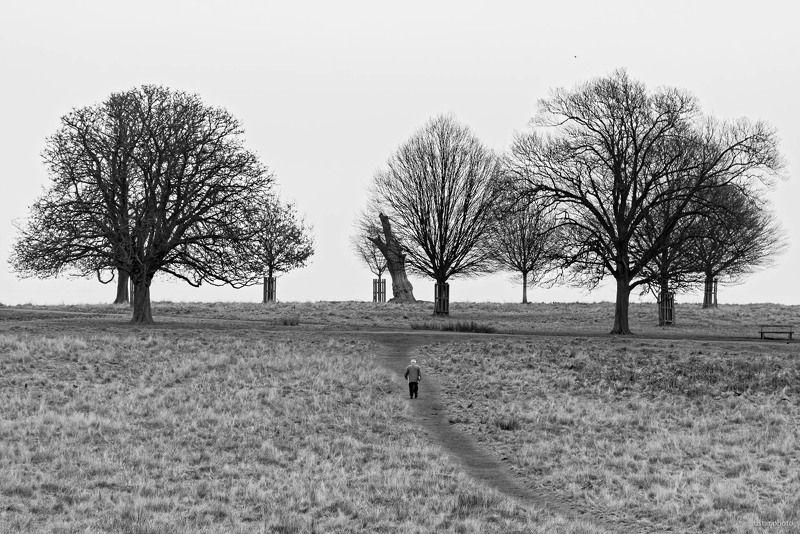 деревья, зима, черное белое, человек, парк Зимнее одиночествоphoto preview