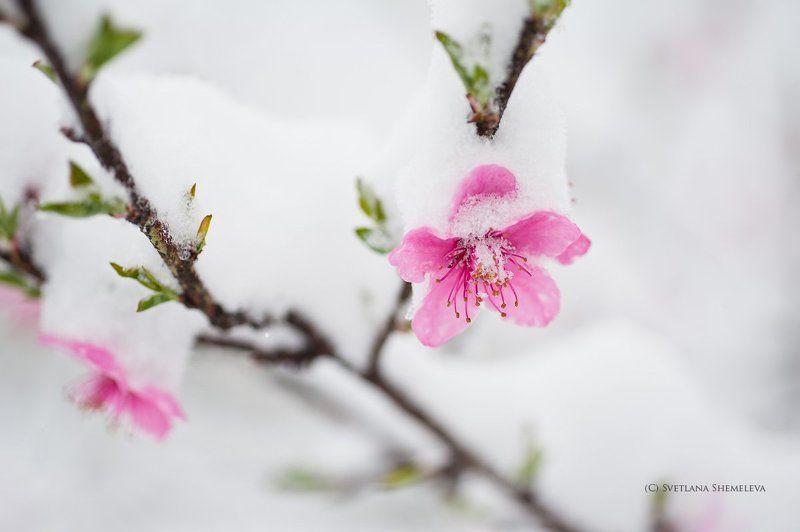 Все мысли о веснеphoto preview