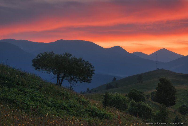 пейзаж, горы, природа, лес, небо, путешествия, красивый, лето, зеленый, украина, трава, дерево, фон, парк, естественный, луг, гора, сезон, красота, цвет, солнце, свет, свежий, карпатский, идиллический, карпаты, карпатские, синий, туризм, вид, холм, время, Карпаты. Дземброня. Закатное небо у горы Косарищеphoto preview