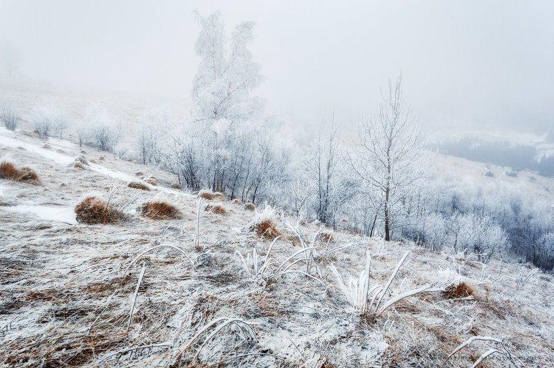 Карпаты. Дземброня. Из серии Морозное утроphoto preview