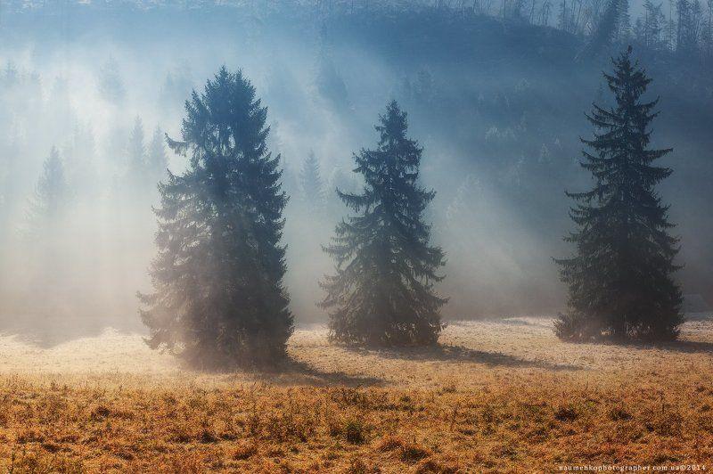 словакия, низкие, татры, туман, природа, горы, пейзаж, белый, лес, климат, туман, фон, синий, дерево, облако, красивый, горы, облака, живописные, высокие, трава, сцена, осень, погода, сосна, туманное, утро, зеленый, вершина, горный хребет Словакия. Осеннее утро у Западных Татрphoto preview