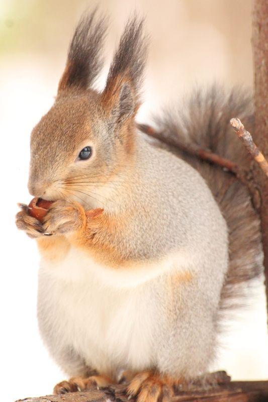 белка, зима, орех Орехи - любимая едаphoto preview
