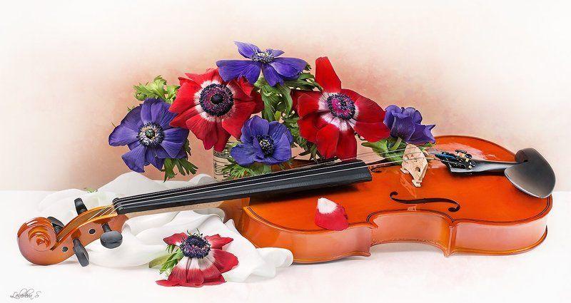 скрипка,музыка,смычок,анемоны,цветы,ноты Натюрморты со скрипкойphoto preview