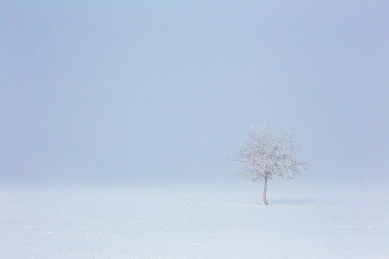 байкал, иркутская область, баяндай, степь, лошади, минимализм, мороз, туман, изморозь, иней, снег, холод, зима В морозном туманеphoto preview