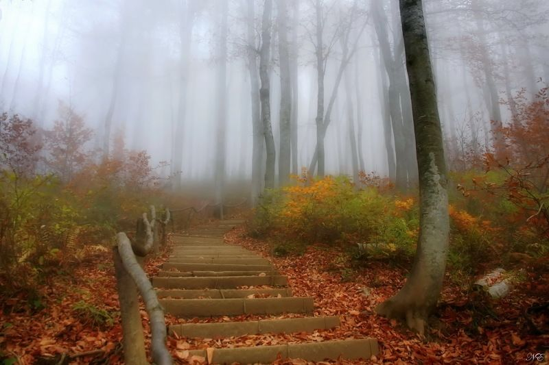 горы осень тропа туман За туманом.photo preview