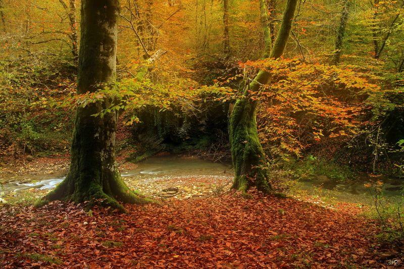лес ручей У  Дремучего ручьяphoto preview