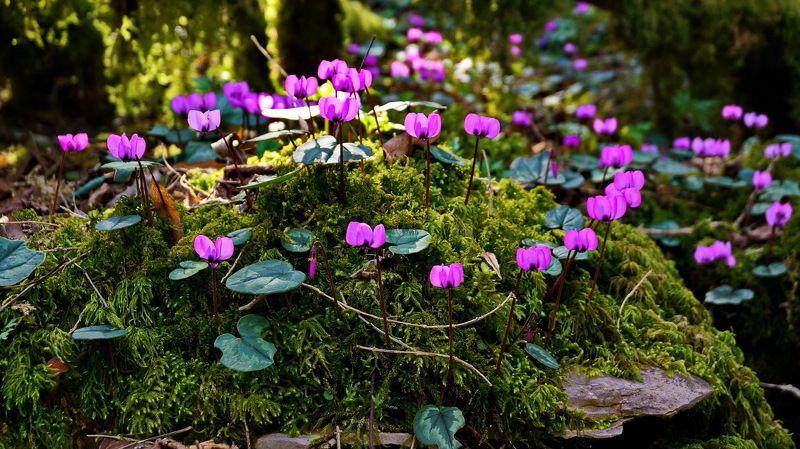 весна первоцветы Мартphoto preview