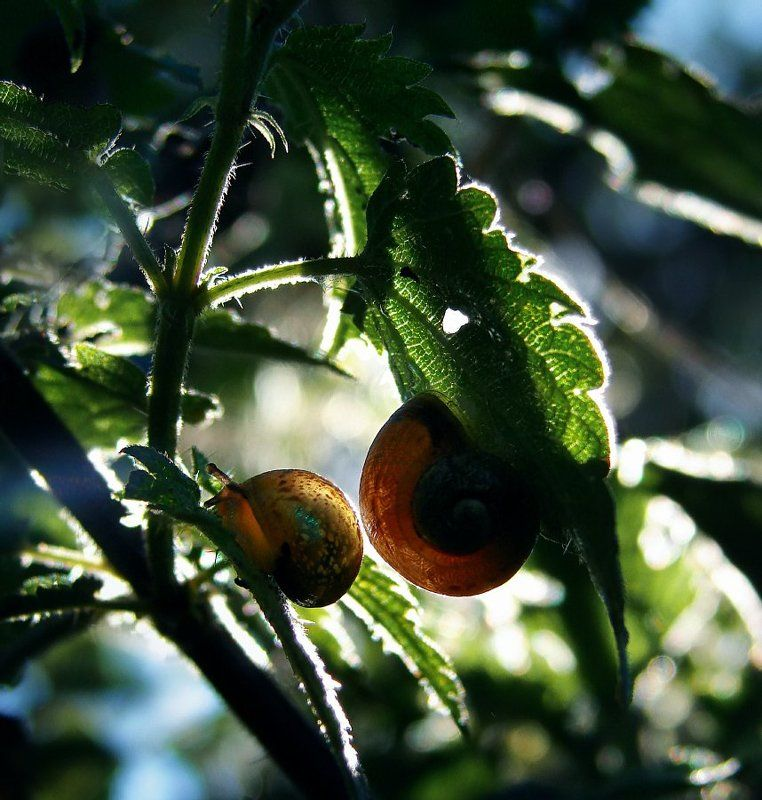 Macro, Snail, Sony, Wake In Obscurityphoto preview