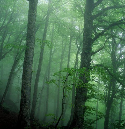 Утро в лесу на Кавказе.