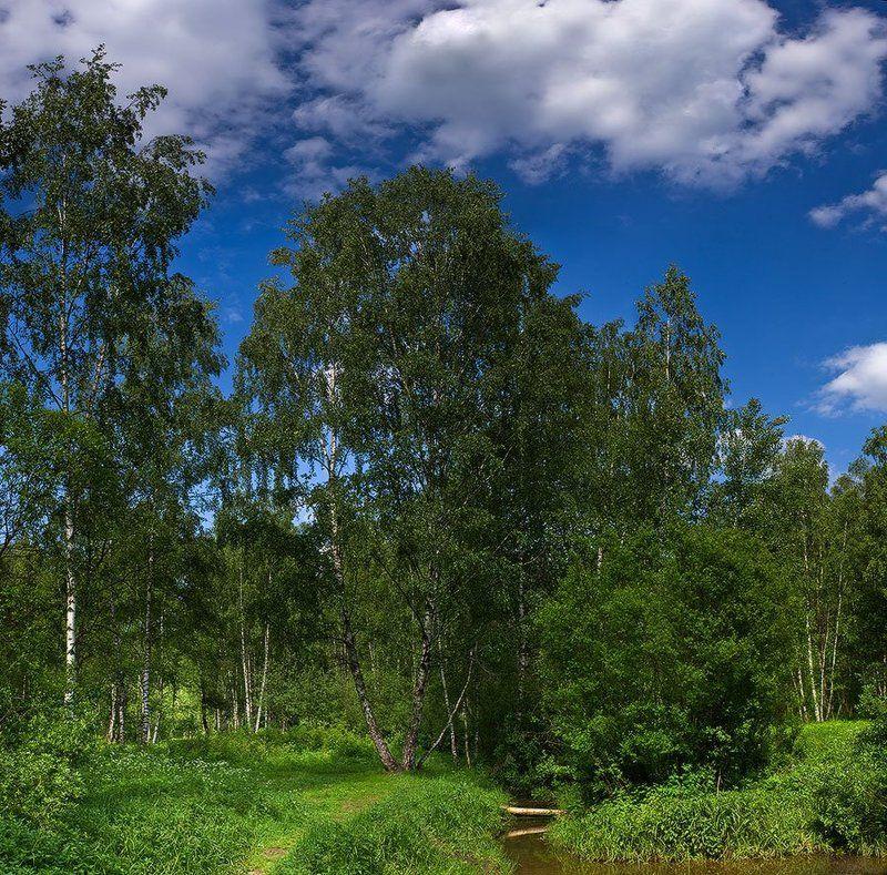 пейзаж, лето, берёзки, лосиный, остров летний пейзаж #..., в парке Лосиный островphoto preview
