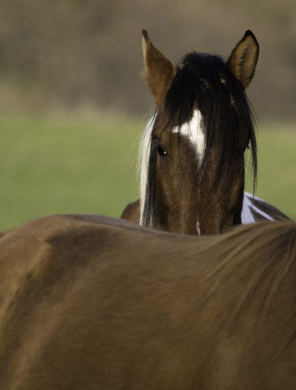 дикие лошадиphoto preview