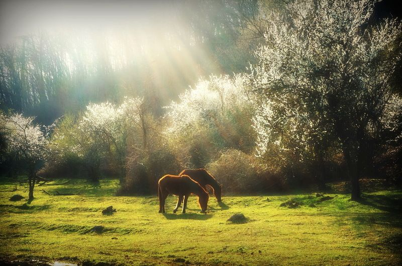 Весна.кони лучи Апрель.photo preview