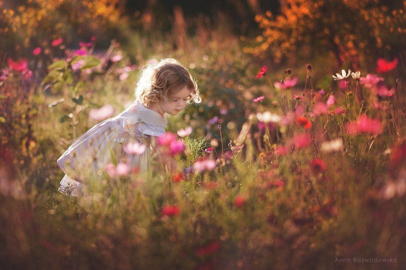 garden, girl, meadow, vintage, Barbaraphoto preview