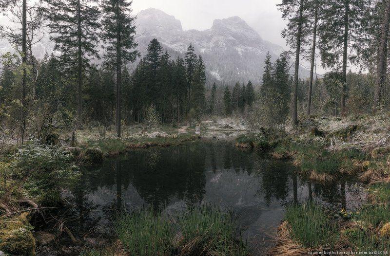 европа,германия,хинтерзее,озеро,осень,бавария,рамзау,путешествия,альпийский,альпы,удивительные,австрия,баварская,красивый,большой,синий,прозрачный,облака,европейский,лес,немецкий,зеленый,остров,земля,пейзаж,величественный The gray morning on the lake.photo preview