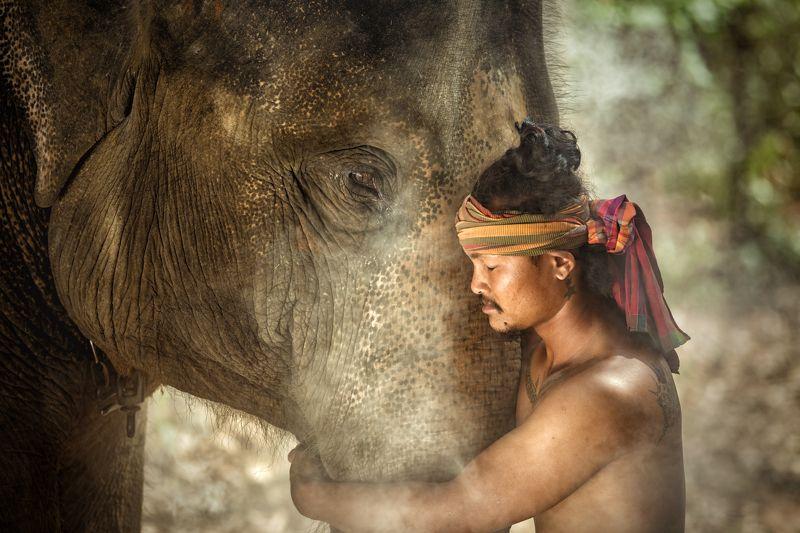 elephant,man,person,animal,thai,india,portrait, Friendshipphoto preview